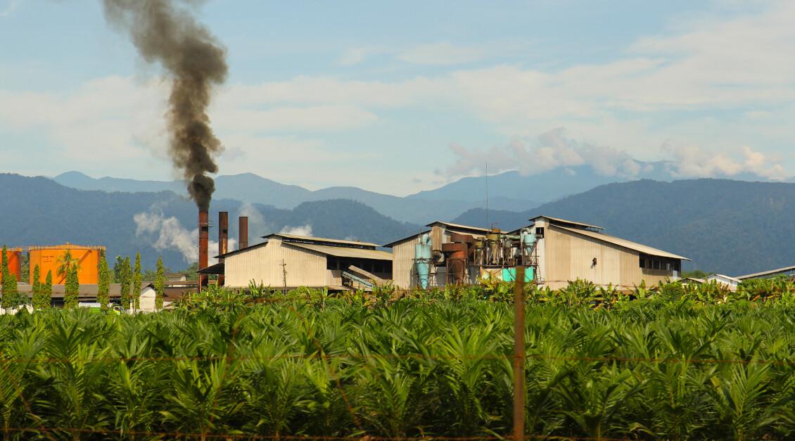 Palmöl RSPO-Zertifizierung