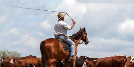 Bullwhip-Effekt: Cowboy auf Pferd